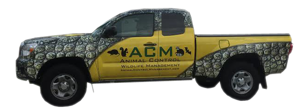 acm-animal-control-wildlife-management
